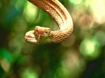программа Travel Channel: В поисках сокровищ: Змеиный остров Выхода нет