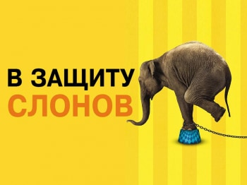программа Amedia Premium: В защиту слонов