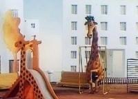 В зоопарке - ремонт фильм (1987), кадры, актеры, видео, трейлеры, отзывы и когда посмотреть | Yaom.ru кадр