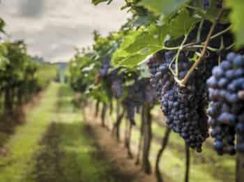 программа Морской: Велопрогулки по тирольским виноградникам