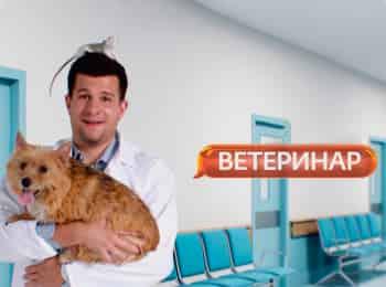 программа Ю: Ветеринар