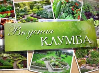 программа Загородная жизнь: Вкусная клумба На заднем дворе