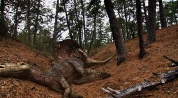 программа History2: Войны Юрского периода Охотник на тираннозавров