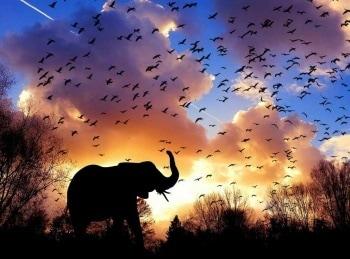 Воспоминания слона в 01:40 на канале Культура