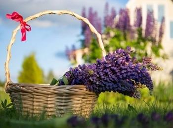 Загородные премудрости Картина из живых цветов в 13:25 на канале