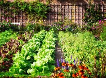 программа Загородный: Зарядка на грядке Комплекс для поясницы Зеленый смузи