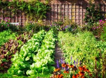 программа Загородный: Зарядка на грядке Комплекс для рук Овощной смузи