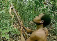 Жизнь по законам джунглей Камерун в 16:00 на канале