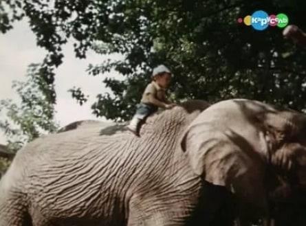 Боба и слон кадры