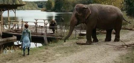 Слон кадры
