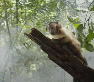 кадр из фильма Амазония