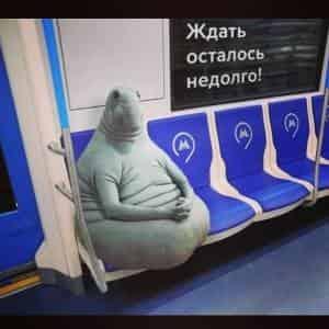 Ждем Ждуна в России