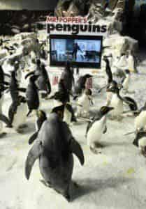 кадр из фильма Пингвины мистера Поппера