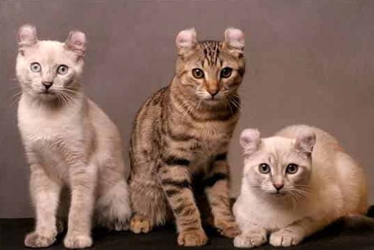 Джуди Денч и фильм Кошки (2019)