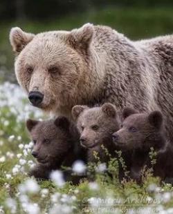 кадр из фильма Медведицы