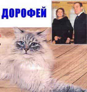 Пушистый питомец Дмитрия Медведева стал звездой Твиттера